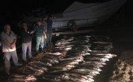 100-dən çox nərə balığı tutan şəxslər saxlanıldı (FOTOLAR)