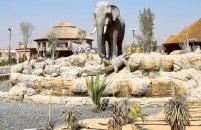 Dubayda 300 milyon dollar dəyəri olan safari-zoopark açılacaq