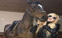 Xalq artisti 50 minlik atını nümayiş etdirdi – FOTOLAR