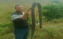 Ağsuda peyda olan böyük Qafqaz gürzəsi öldürüldü – FOTO