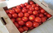 Rusiya 18 ton pomidoru Azərbaycana qaytarıb