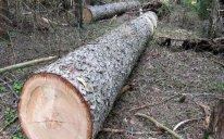 Qanunsuz ağac emalı sexləri aşkarlandı