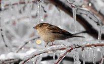 Bakıda fevral ayı üçün ən soyuq temperatur 2012-ci ildə qeydə alınıb