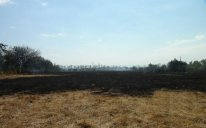 Qusarda 415 hektarlıq fındıq bağında böyük yanğın olub