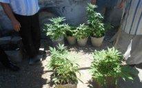 Vətəndaşın həyətində külli miqdarda narkotik aşkarlandı - Foto