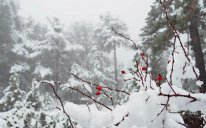 XƏBƏRDARLIQ: Hava qeyri-sabit olacaq, qar yağacaq, yollar buz bağlayacaq