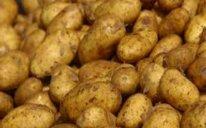 Azərbaycan ötən ilin 11 ayında Rusiyaya 77,6 min ton kartof ixrac edib