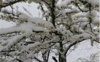 Qubaya qar yağıb, ağaclara zərər dəyib - FOTO - VİDEO