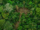 Bu il Amazon meşələrində 72 mindən çox yanğın baş verib