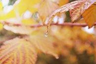 Hava şəraiti qeyri-sabit keçəcək, intensiv yağış yağacaq - XƏBƏRDARLIQ