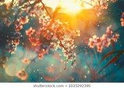 Aprel ayına olan hava proqnozu açıqlandı