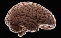 Alimlər koronavirusun beyinə dağıdıcı fəsadları barədə xəbərdarlıq etdilər