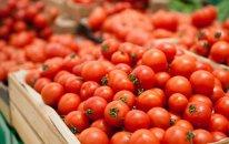 Pomidorun qiyməti nə üçün kəskin bahalaşıb? (VİDEO)