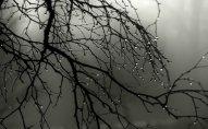 Sabaha olan hava proqnozu  -Yağış yağacaq