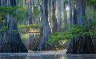 Gözəlliyi ilə adamı valeh edən ağaclar – FOTO