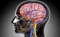 Beyin üçün ən faydalı məhsul təyin olunub