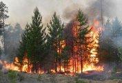 Bakıda 1 hektar ərazidə ağaclar yanaraq məhv oldu