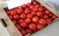 Azərbaycandan aparılan 18 ton pomidor Rusiyaya buraxılmayıb
