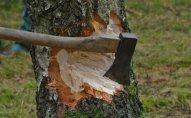 Qanunsuz ağac kəsənlər saxlanılıb