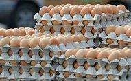 Norveç yığması səhvən 15 min yumurta alıb