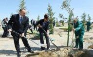 Prezident İlham Əliyev ağacəkmə aksiyasında iştirak edib