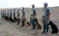 ANAMA 20 il ərzində 53 min ha ərazini minalardan təmizləyib