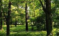 Lerikdə 70 yaşlı kişi qoz ağacından yıxılaraq ölüb