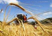 Çin ABŞ-dan kənd təsərrüfatı mallarını almağa hazırdır