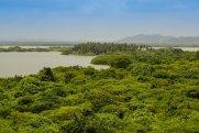 ABŞ və Braziliya Amazon meşələrinin qorunmasına 100 mln. dollar ayıracaq