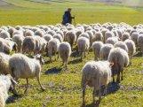 Göygöldə çoban itkin düşüb