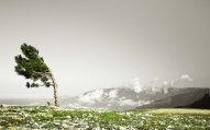 Sabah güclü şimal-qərb küləyi əsəcək