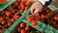 Pomidor böhranı yenidən başladı