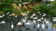 Bakı Zooloji Parkına giriş qiymətləri müəyyənləşdi