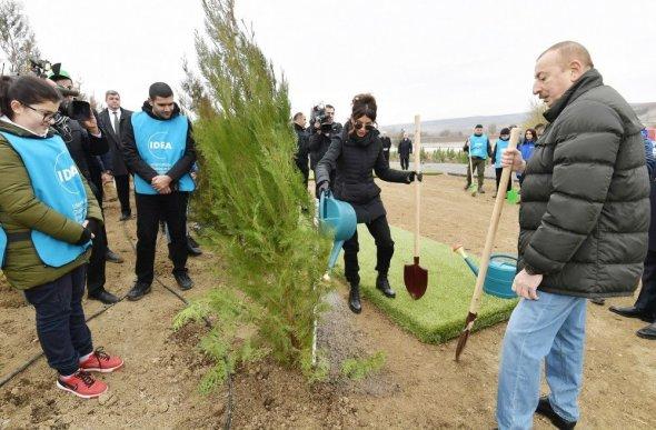 Prezident və xanımı Mehriban Əliyeva Şamaxı rayonunda ağacəkmə aksiyasında iştirak ediblər – YENİLƏNİB/FOTOLAR