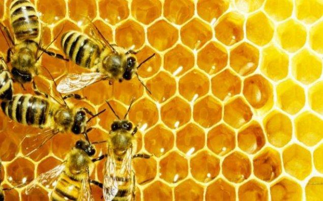 Alimlər arılar haqqında İNANILMAZ FAKTLAR aşkarladı