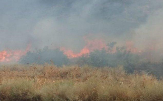 Göyçayda 50 hektar taxıl sahəsi yandı