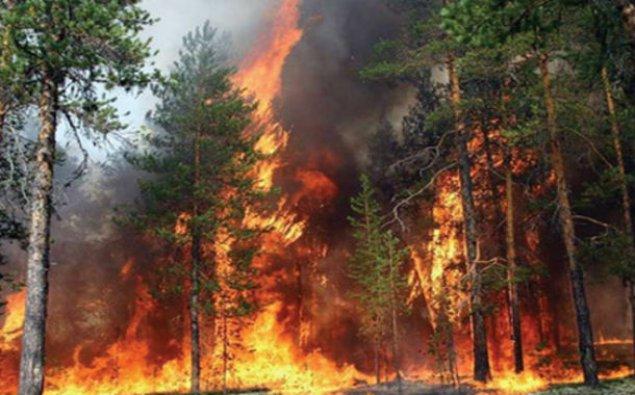 Gürcüstandakı meşə yanğını 3.5 hektar əraziyə yayılıb