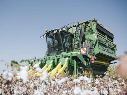 Ölkədə 130 min 201 ton pambıq yığılıb