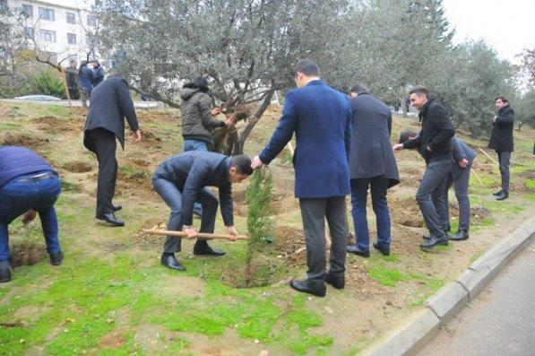 Nəsimi rayonunda ağacəkmə aksiyası keçirildi – FOTO