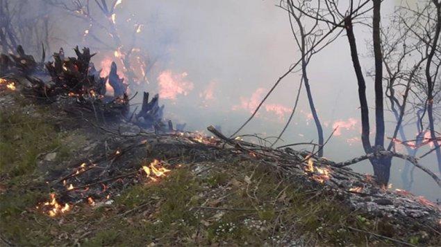Yardımlıda meşə yanğınları davam edir - Helikopter göndərildi