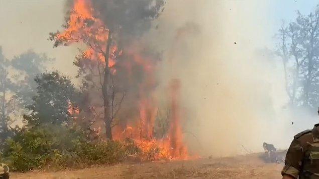 Yardımlıdakı meşə yanğınından yeni görüntülər (VİDEO)